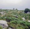 mont lozere roches
